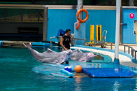 Trainer blowing whistle at the completion of Dolphin show at the