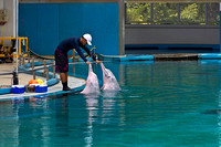 Trainer patting the dolphins as a part of Dolphin show at the Un