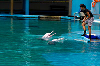 Female Trainer feeding 2 dolphins at the Underwater world in Sen