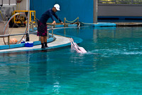 Trainer feeding duo of dolphins at the Underwater world in Sento