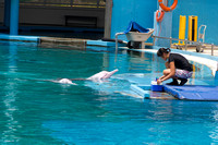 Dolphin and trainer at the Underwater World in Sentosa in Singap