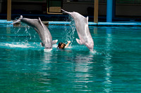 2 dolphins jumping over female trainer at the Underwater world i