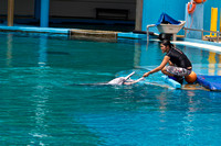 Feeding the dolphins as part of Dolphin show at the Underwater w
