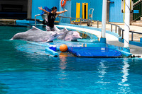 Female Trainer with the 2 dolphins at the Underwater world in Se